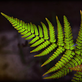 Fern by Katie McKinney - Nature Up Close Leaves & Grasses ( contrast, fern, detail, patterns, nature, flora, green, plants, leaves, ferns,  )
