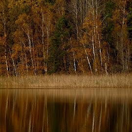 Fall by Alf Winnaess - Uncategorized All Uncategorized