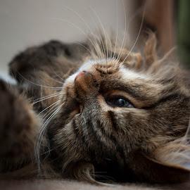 After hours by Aleksandra Ewa Chmiel - Animals - Cats Portraits