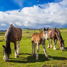 Hello by Angela Higgins - Animals Horses