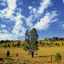 Standing Alone by Tony Bendele - Landscapes Prairies, Meadows & Fields ( nature, tree, outdoors, trees, landscape )