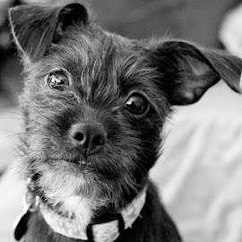 by Maria Medina - Animals - Dogs Portraits