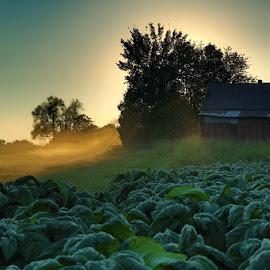 The Tobacco Farm by Adam Snyder - Landscapes Prairies, Meadows & Fields