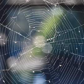 Searching the Web by Liz Rosas - Artistic Objects Other Objects ( bugs, web, reflections, waterfront, shadows, bugcatcher, dead flies, river, dock, spider, lake )