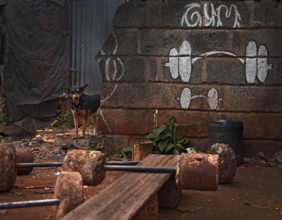 Slum Gym by Jordan McGibney - Buildings & Architecture Other Exteriors ( african, gym<dog )