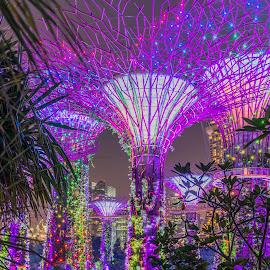 Avatar of Singapore by Gary Stanley - City,  Street & Park  City Parks ( avatar of singapore, gardens by the bay, marina bay, singapore, nightscape )