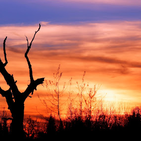 Sunset silhouette  by Rima Biswas - Landscapes Sunsets & Sunrises ( orange, sky, nature, tree, blue, silhouette, sunset, dead )