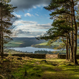 Leighton Reservoir by Sandra Cockayne - Landscapes Forests ( woodland walk, reservoir, leighton, sandra cockayne, druids temple, woodland, forest, forest walk, woods,  )