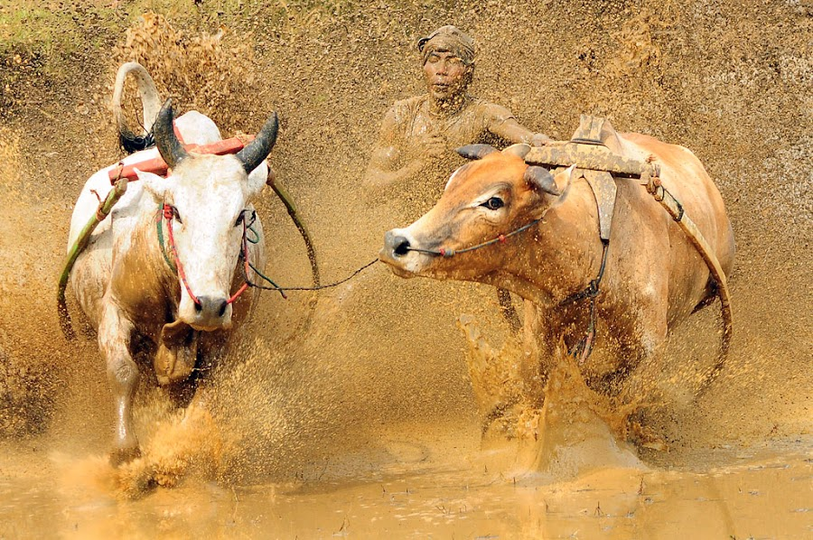 drawning in mud by Deddy Hariyanto - Sports & Fitness Other Sports ( sport )