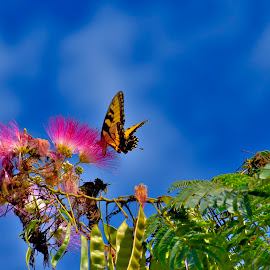 Butterfly on the Mimosa by Mark Clark - Digital Art Animals ( pink, green, fawna, seeds, flora, insects, trees, blooms, foliage, leaves, butterfly, contrasts, landscape,  )