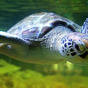 I Can Fly by Rakhman Matsunaga Stavolt - Animals Sea Creatures