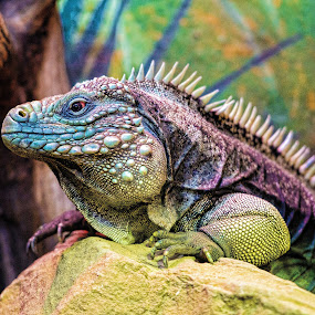 Spiky by Judy Rosanno - Animals Reptiles ( lizard, colorful, spiky, reptile, animal, profile,  )