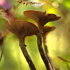 by Rod Fewer - Nature Up Close Mushrooms & Fungi ( natural light, fungi, nature, wide open, forest, supertak, mushrooms )