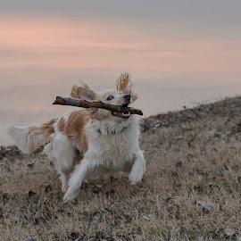 Playing outside by Dubravka Krickic - Animals - Dogs Running ( playing, stick, croatia, lake, dog, running )