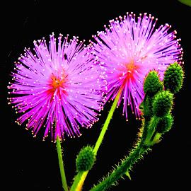 FLOWERS by SANGEETA MENA  - Digital Art Things