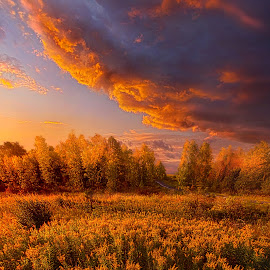 Remember Everything by Phil Koch - Landscapes Sunsets & Sunrises ( field, wisconsin, pea  ce, green, outdoor, forest, sunrise, flowers, light, woods, shadows )