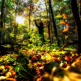 THE SHADOW OF YOUR SMILE by Michael Rey - Landscapes Forests ( fall season, autumn, wildflower, sunset, forest, woods, leaves on ground )