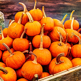 by John Amelia - Nature Up Close Gardens & Produce ( pumpkins, halloween )