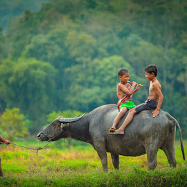 Flute With Buffalo by Heri Budianto - Babies & Children Children Candids ( playing, portrain, carabao, children )