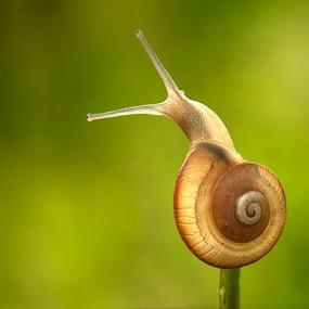 I love Slow by Prana Jagannatha - Animals Other ( wildlife, snail )