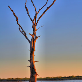 Lone Tree At Sunset by Kristen O'Brian - Landscapes Waterscapes ( water, tree, brown tan, blue, lake, beach, pond )