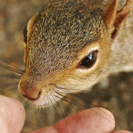 by Frank Gray - Uncategorized All Uncategorized ( mammals. animals, squirrels, nature up close, beautiful nature )