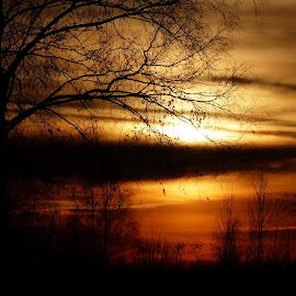 Trees in sunset by Renata Zemanová - Landscapes Sunsets & Sunrises ( sky, sunset, trees, sun )