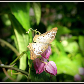Butterfly  by Maritza Féliz - Animals Insects & Spiders ( butterfly, nature, colorful, insects, flower )