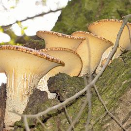 by Vladymyr Sergeev - Nature Up Close Mushrooms & Fungi
