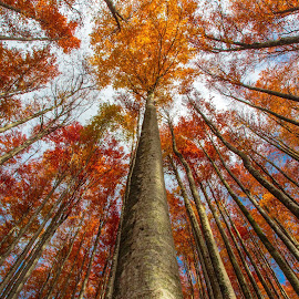 Fire in the forest by Stanislav Horacek - Nature Up Close Trees & Bushes