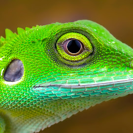 Small Dinosour by Tan Tc - Animals Reptiles ( lizard, nature, macro photography, close up, animal )