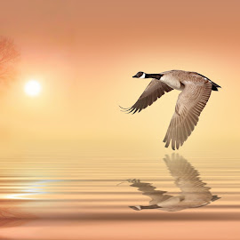 MISTY by Nasser Osman - Digital Art Animals ( reflection, tree, nasser osman, misty, goose )