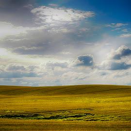 Field of gold by Kim Moeller Kjaer - Landscapes Prairies, Meadows & Fields