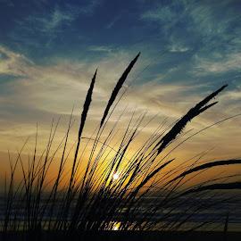 sunset by Lisa Hunter - Uncategorized All Uncategorized