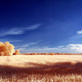 Wide fields by Thorsten Scheel - Landscapes Prairies, Meadows & Fields ( clouds, ir, blue sky, zingst, infrared, infrarot, barth )