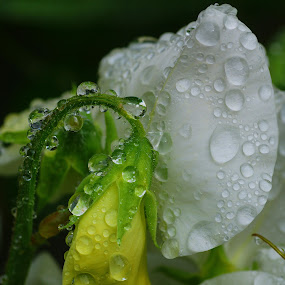 After the rain by Tim Bennett - Flowers Flowers in the Wild