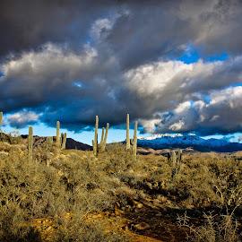 In The Shadow by Bryan Snider - Landscapes Deserts ( mountains, four peaks, sonoran desert, desert, cacti, snow, arizona, arizona desert, cactus, saguaro )