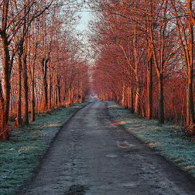 Winter colors by Matteo Chinellato - City,  Street & Park  Vistas ( winter, colore, autunno )