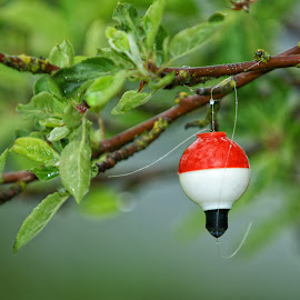 Rained Out by Twin Wranglers Baker - Artistic Objects Other Objects ( fishing bobber, summer, raindrops, bobber, fishing,  )
