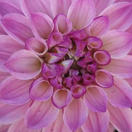 by Roxanne Collin - Flowers Single Flower