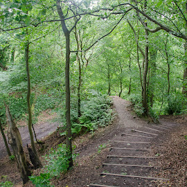 Roslin Glen by Dacey Uthoff - Landscapes Forests ( roslin, scotland, uk, stairs, green, outdoors, path, trees, forest, roslin glen, hiking, united kingdom )