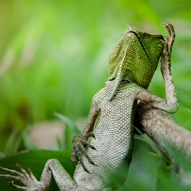 Sleeping Beauty by Ircham Sujadmiko - Animals Reptiles ( macro art, macro, macro photography, dragon, sleeping, reptile )