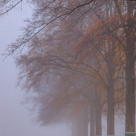 Foggy Morning by Rananjay Kumar - Landscapes Weather ( #landscape, #colorful, #canon, #fog, #morning )