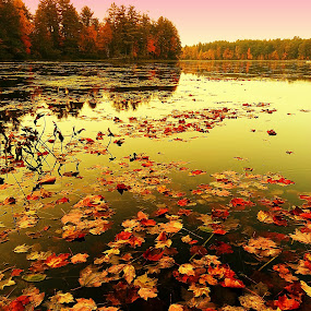 what fall color has to offer by David Pratt - Landscapes Waterscapes ( water, reflection, color, fall, trees, leaves )