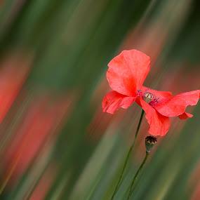 by Sabina Lombardo-Salmina - Flowers Flowers in the Wild