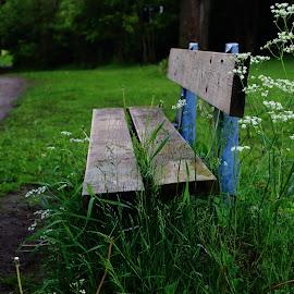 Bench in the park by Ansari Joshi - City,  Street & Park  City Parks ( bench, park, green, road, landscape )