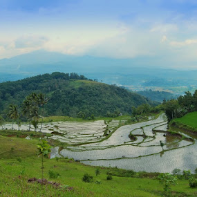 Solok by Taufik Taspa - Landscapes Mountains & Hills