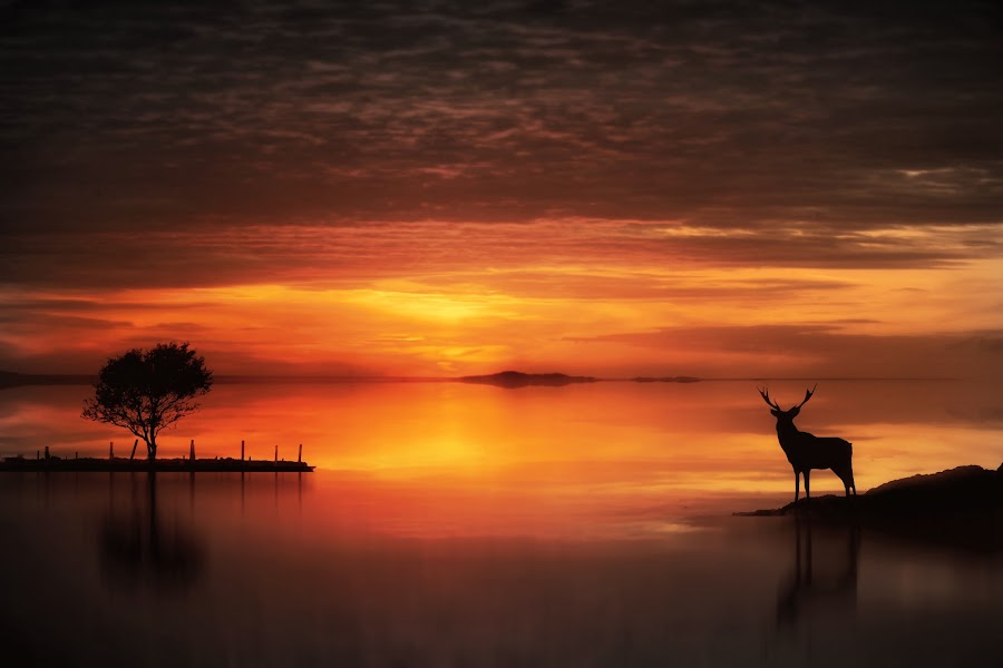 In the Golden Light  by Jennifer Woodward - Digital Art Places ( sunset, silhouette, deer )