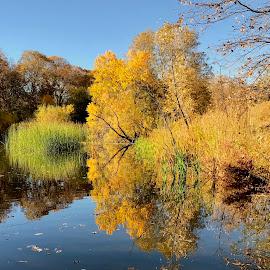 Oak Hill Pond by Richard Duerksen - Nature Up Close Trees & Bushes ( ca, autumn, oaks hill, sanj bernardino, trees, reflections, yellow, leaves )