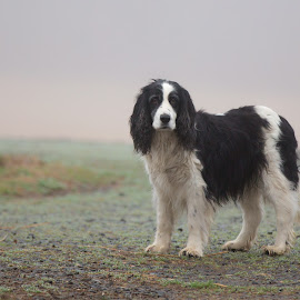 Dog in Fog by Jack Nevitt - Animals - Dogs Portraits ( farm, shaggy, fog, dog, standing )